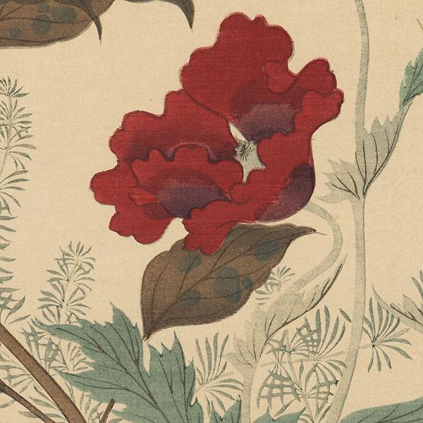 A Frothy Poppy by Hoitsu Jonin (1761 - 1828)
