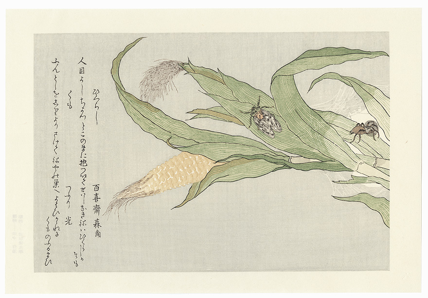 Evening Cicada and Spider by Utamaro (1750 - 1806)