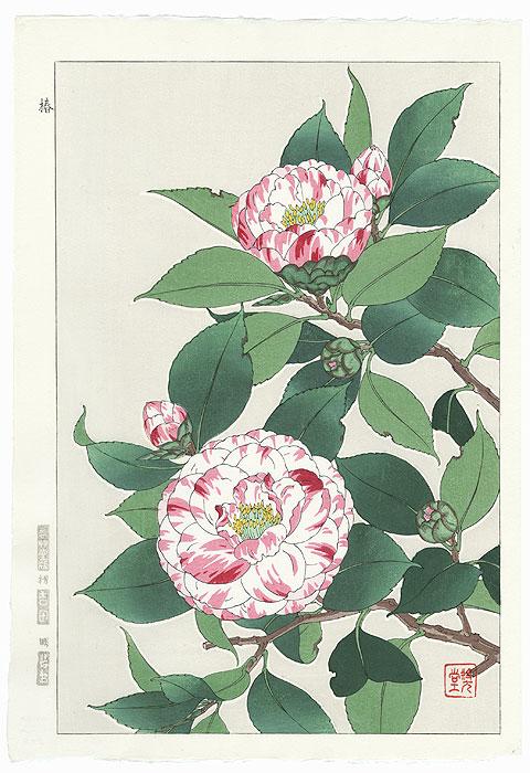 Pink and White Striped Camellia by Kawarazaki Shodo (1889 - 1973)