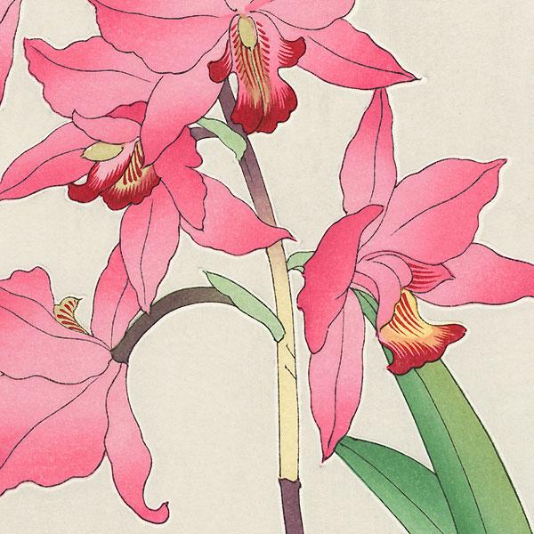 Orchids by Kawarazaki Shodo (1889 - 1973)