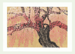 http://www.fujiarts.com/japanese-prints/Namiki/9WeepingCherry15f.jpg