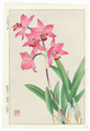 http://www.fujiarts.com/japanese-prints/shodo/orchidsf.jpg