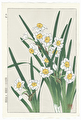 http://www.fujiarts.com/japanese-prints/DUPshodo/narcissusf.jpg