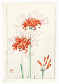 http://www.fujiarts.com/japanese-prints/DUPshodo/spiderlily2f.jpg