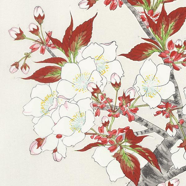 Cherry by Kawarazaki Shodo (1889 - 1973)