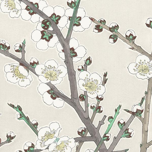 White Plum by Kawarazaki Shodo (1889 - 1973)