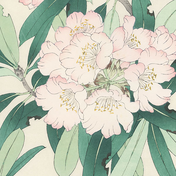Rhododendron by Kawarazaki Shodo (1889 - 1973)