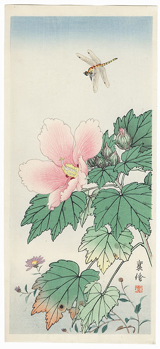 Dragonfly and Hibiscus by Jo (Hashimoto Yuzuru) (active 1920s - 1930s)